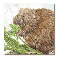 Greetings card, water vole