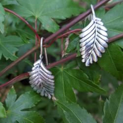 Ear climbers, leaves