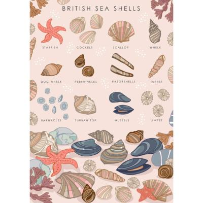 "Greetings card ""British sea shells"" 12x17cm"