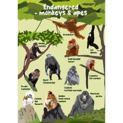 Greetings card Endangered Wildlife Monkeys & Apes 12x17cm